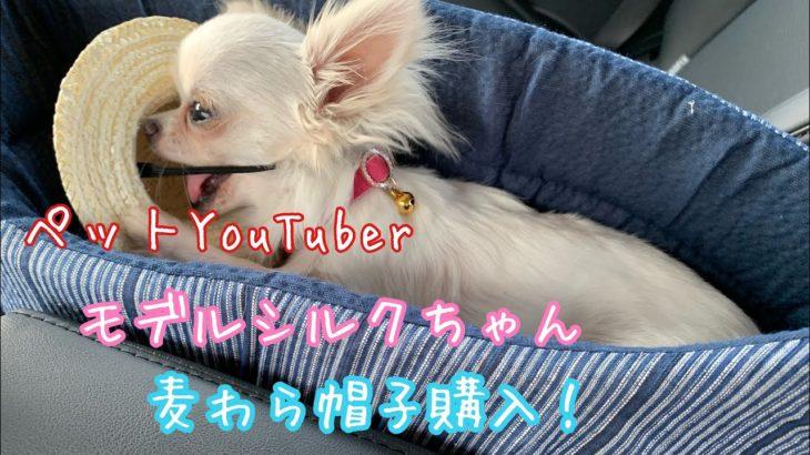 🔵🔴【チワワ シルク】ペットYouTuberシルクちゃん麦わら帽子【犬帽子】【犬ユーチューバ】