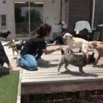 ペットホテル x 犬のしつけ 2019.06.25