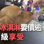 ペット用アイスクリームが300元、台湾のペット市場は年間500億元