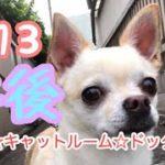 7/13午後のご様子♪羽田空港近くのペットホテルエアライン羽田にご宿泊中のペットちゃん達のご様子です。