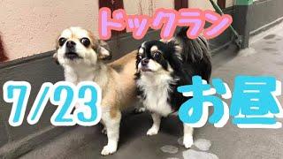 7/23昼♪羽田空港近くのペットホテル・エアライン羽田にご宿泊中のペットちゃん達のご様子です。