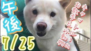 7/25午後☀️羽田空港近くのペットホテル、エアライン羽田にご宿泊中のペットちゃん達のご様子です。
