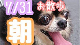 7/31朝☀️羽田空港近くのペットホテルエアライン羽田にご宿泊中のペットちゃん達のご様子です。