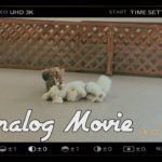 【Analog Movie】友達に会いに行くよ[兵庫ペット医療センター トリミング 尼崎 犬動画 ]Happy dog glooming
