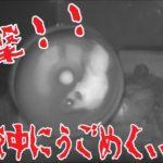 【ハムスター】衝撃映像!赤外線カメラは見た! ※閲覧注意 [Hamster] Impact picture! I saw an infrared camera! ※ Attention