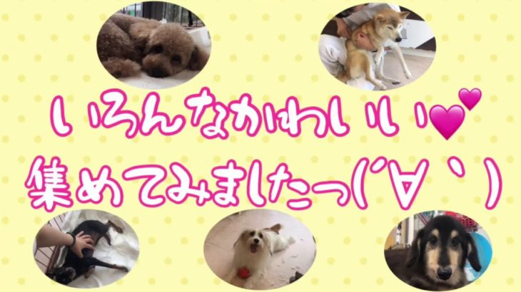 かわいいがいっぱい!💕[兵庫ペット医療センター トリミング 尼崎 犬動画 ]Happy dog glooming