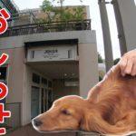ペットショップJOKERさんでの『イヌなで』セミナー。ドッグマッサージやるよ。