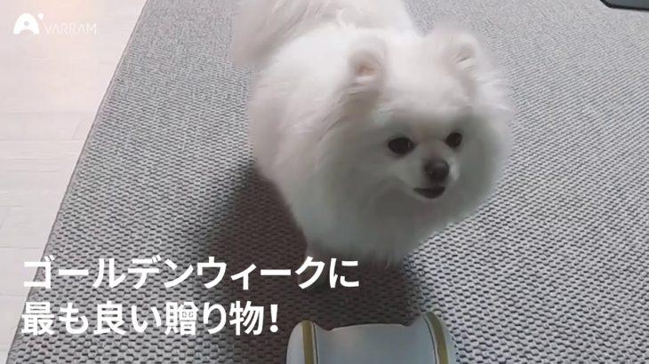バレム・ペット・フィットネス (Sub video-4)