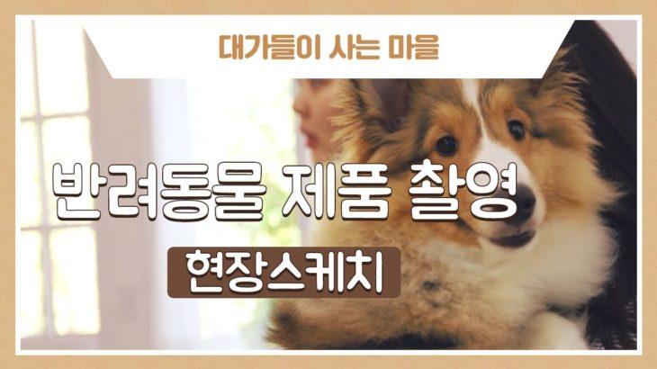 반려동물 제품촬영 / shooting of pet products / ペット商品の写真撮影 @herotown