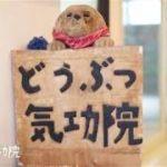 動物愛護団体のボランティアから生まれた「ペットのための気功」なら「どうぶつ気功院」