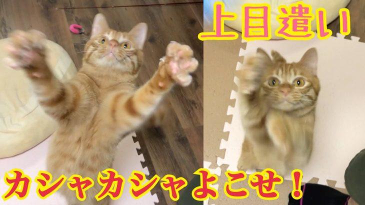 ペットボトルのラベルが気になって堪らない猫がかわいい!