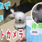 おすすめ!ペットカメラ・ベビーモニター・防犯カメラに!【ノルウェージャンフォレストキャット】