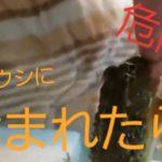 【グロ!噛まれた!】うっしーのご飯【流血衝撃映像】