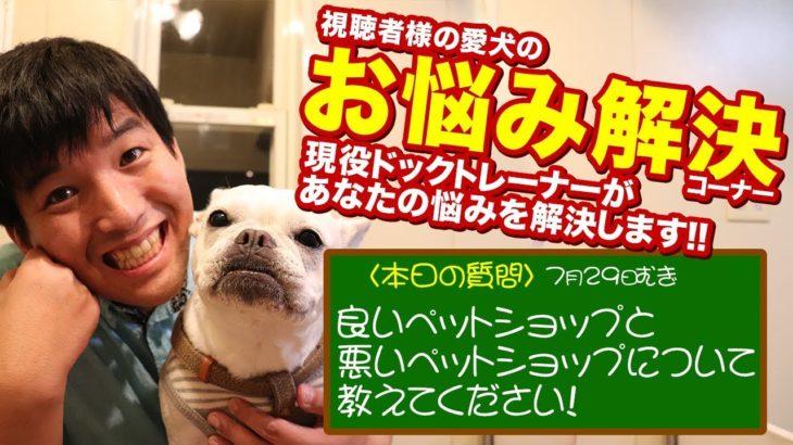 【愛犬のお悩み解決コーナー】良いペットショップと悪いペットショップについて教えてください!難しい質問が来ました!