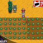 #31【シミュレーション】こたつのPC版『Stardew Valley(スターデューバレー)』ゲーム実況【ヘイリー推し&MOD編:2年目春】