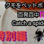 百発百中⁉️ クモをペットボトルで  Catch a spider