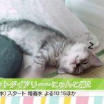 【Kchan!韓流TV】ペットダイアリー~にゃんこ編2