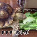 番外編【モリタPPP】ウチの人生初の食レポ編 NMB48 森田彩花