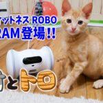 【保護猫のトロ】ロボットの友達ができました!(ペットフィットネスVARRAM) ーI got a robot friend!ー