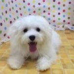 ペットショップcoo&riku No.427622
