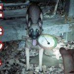 【Blair Witch】#5 暗すぎる森で重機部品を探しつつの肝試し【ゲーム実況】Blair Witch ブレア ウィッチ