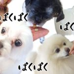 いっぱい食べる君が好き![兵庫ペット医療センター トリミング 尼崎 犬動画 ]Happy dog glooming