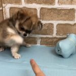 【No.】ペットショップ犬の家猫の里碧南店