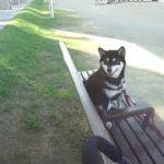 ペットカートに乗って散歩に行く黒柴夏子と子猫のそら