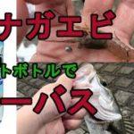 テナガエビ・シーバス、ペットボトル釣りも【ばんたかの釣行見聞録vol.19】