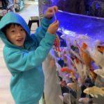 鯉の餌やり体験して濡れた!ひごペットフレンドリー、ららぽーとEXPOCITY店