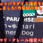 日本スピッツ〈ペットパラダイス福袋 2020年も〉japanesespitz
