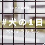 【犬チャンネル】犬のようちえん「minakuru」での犬の1日「dog a day at minakuru」