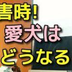 【ペット 防災】東日本大震災ペット避難所の様子【犬のしつけ@横浜】byドッグトレーナーエマ