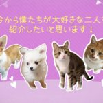 プロフィールムービー/アニマルショー(ペット4匹バージョン)