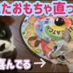 【癒し猫動画】【ペット動画】壊れたおもちゃ直ったよ✨けど遊び方がビックリ🤣【The broken toy is fixed】【healing cat video】【pet video】