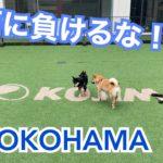 【ドッグラン】日本最大級のペットショップにあるドッグランに行ってきた!!