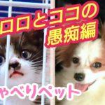 Talking dog『おしゃべりペット』愚痴編