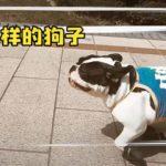 【動物】ペットに靴を履かせたら、どうなる!?2020100333