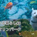 ペットと行ける水族館にウエスティが潜入!【犬のいる暮らし#8】