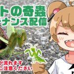 【虫の映像が流れます】ペットの奇蟲メンテナンス配信2【ご注意ください】