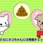 犬猫ペット保険アニコム損保紹介サービス編