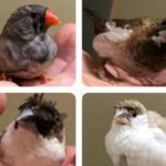 うちのペットの鳥に食べものの名前が多い理由 そこに込められた意味とは!? 全米が泣いた