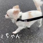【ペットホテル】♪朝のお散歩&運動♪