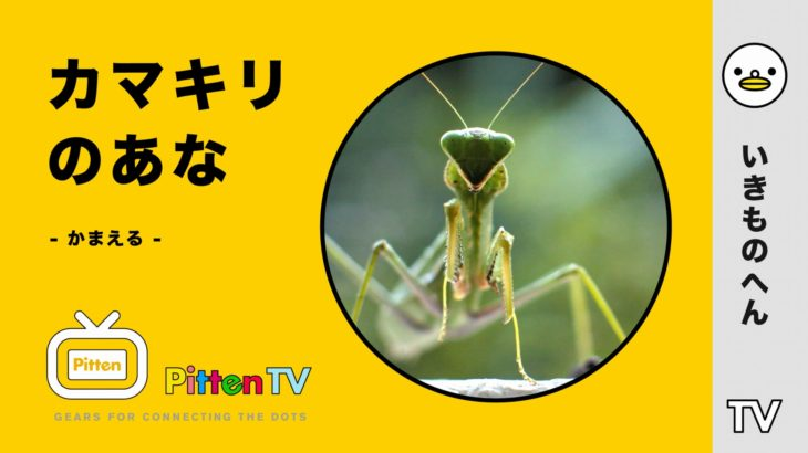 PittenTV_MANTIS_#001